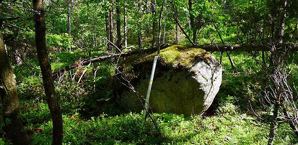 sten_i_skog